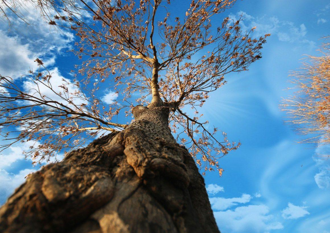 tree-5491570_1920